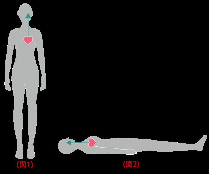 上まぶたが浮腫むメカニズム②日中と寝ている間の血流(水分の流れ)が異なる
