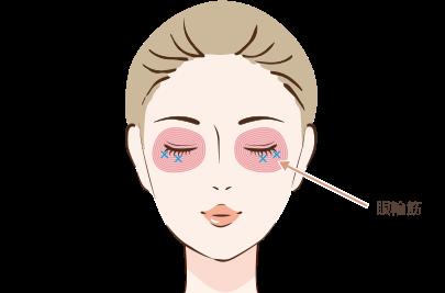 たれ目注射の注入箇所と効果①眼輪筋に注射を行います